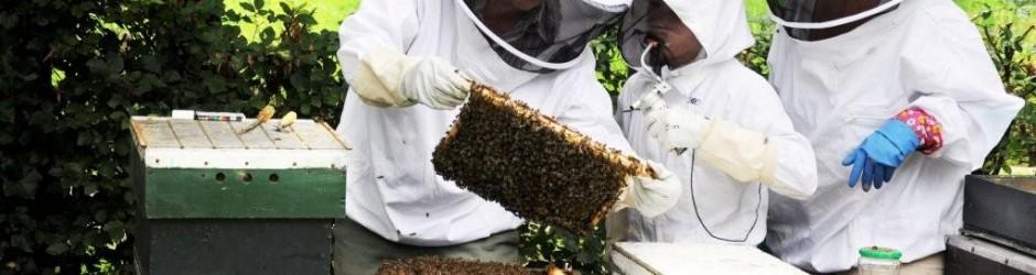 Bijenhouders bij hun bijen